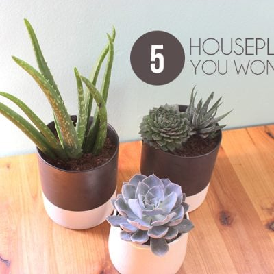 Five Household Plants for a Black Thumb