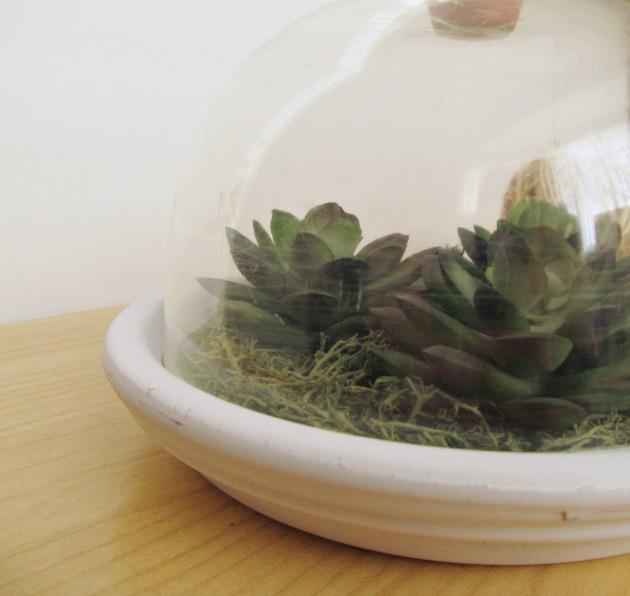 DIY succulent  c