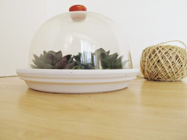 DIY succulent d