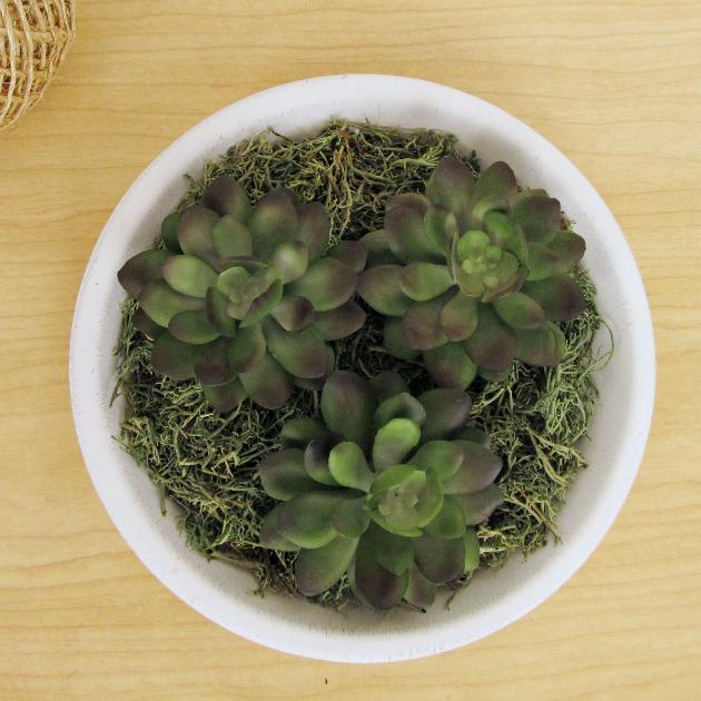 DIY succulent f