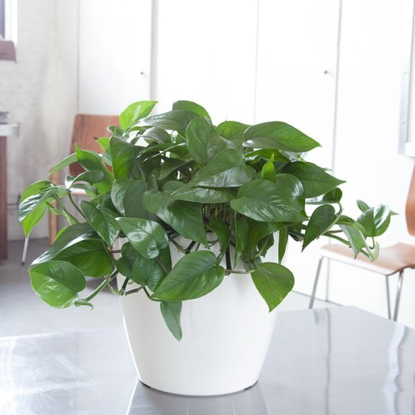Top 5 Houseplants for a Black Thumb | Home Coming for thegirlcreative.com